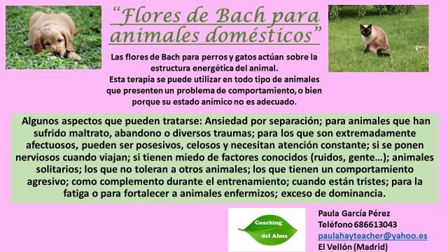 Flores de bach para animales información